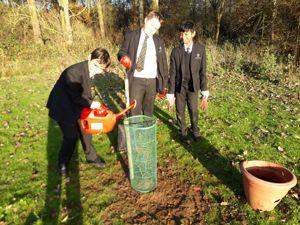 Tree planting image 1
