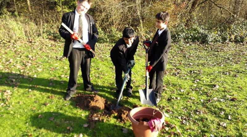 Knole Academy Tree Project Report