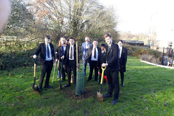 Tree planting image 4