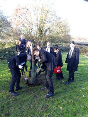 Tree planting image 6